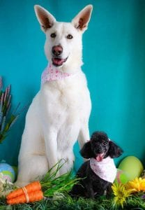 dog-grooming-easter