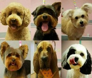 dog-grooming-poses